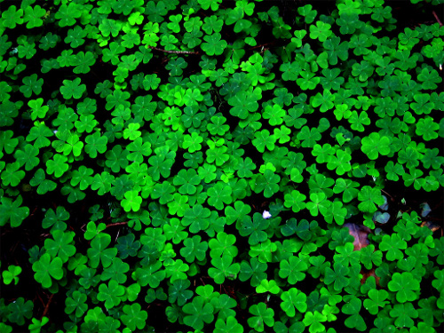 four leaf clover,the best laid plans